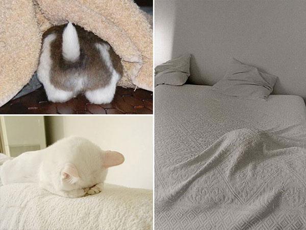 Cães-e-gatos-brincando-de-esconde-esconde-Blog-Animal (15)
