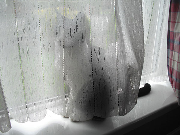 Cães-e-gatos-brincando-de-esconde-esconde-Blog-Animal (16)