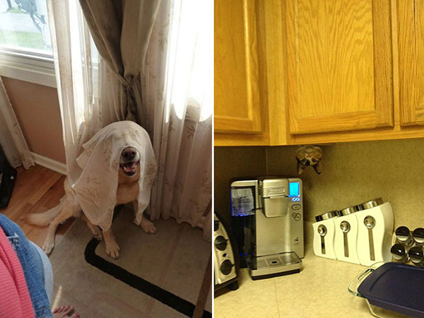 Cães-e-gatos-brincando-de-esconde-esconde-Blog-Animal (17)