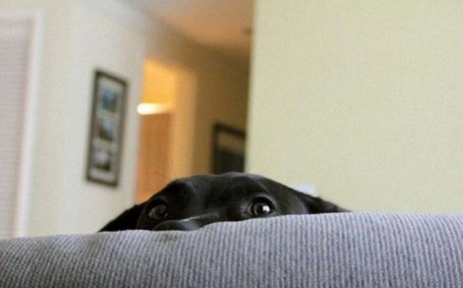 Cães-e-gatos-brincando-de-esconde-esconde-Blog-Animal (2)