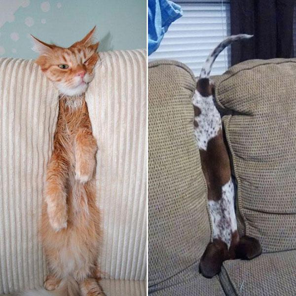 Cães-e-gatos-brincando-de-esconde-esconde-Blog-Animal (3)