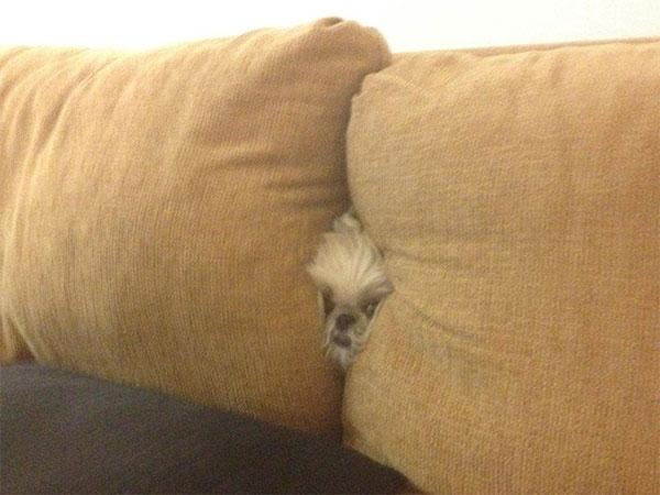 Cães-e-gatos-brincando-de-esconde-esconde-Blog-Animal (4)