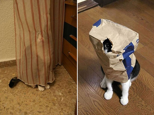 Cães-e-gatos-brincando-de-esconde-esconde-Blog-Animal (6)