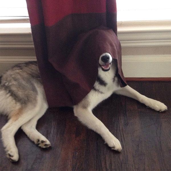 Cães-e-gatos-brincando-de-esconde-esconde-Blog-Animal (7)