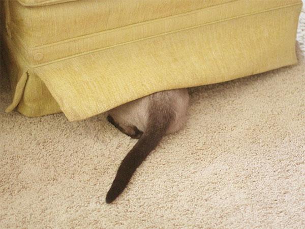 Cães-e-gatos-brincando-de-esconde-esconde-Blog-Animal (8)