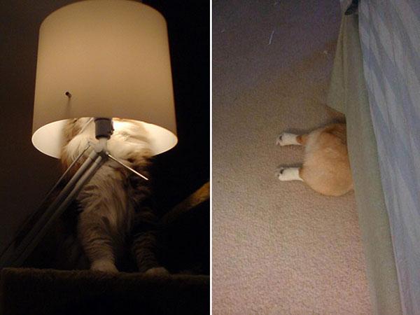 Cães-e-gatos-brincando-de-esconde-esconde-Blog-Animal (9)