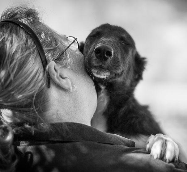 Cães fofos abraçando seus donos (12)