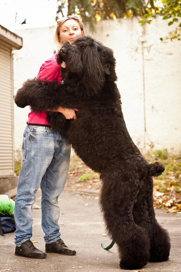 Cães fofos abraçando seus donos (13)