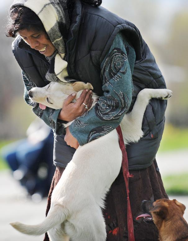 Cães fofos abraçando seus donos (16)