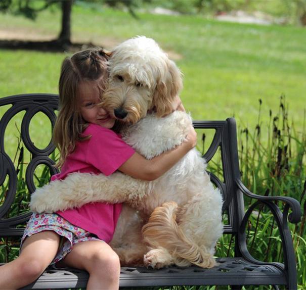 Cães abraçando seus donos