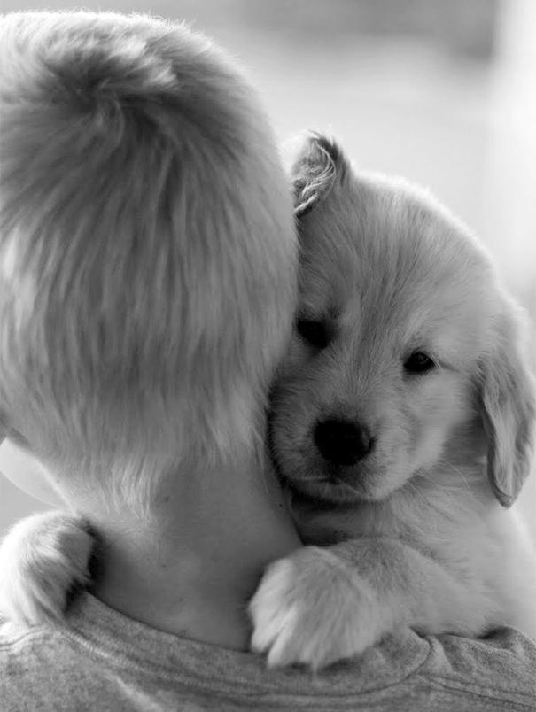 Cães fofos abraçando seus donos (19)