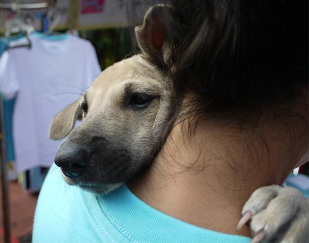 Cães fofos abraçando seus donos (20)