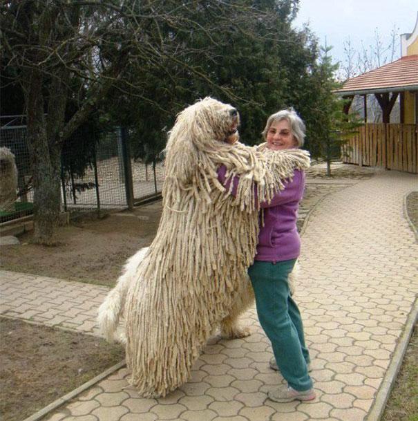 Cães fofos abraçando seus donos (23)