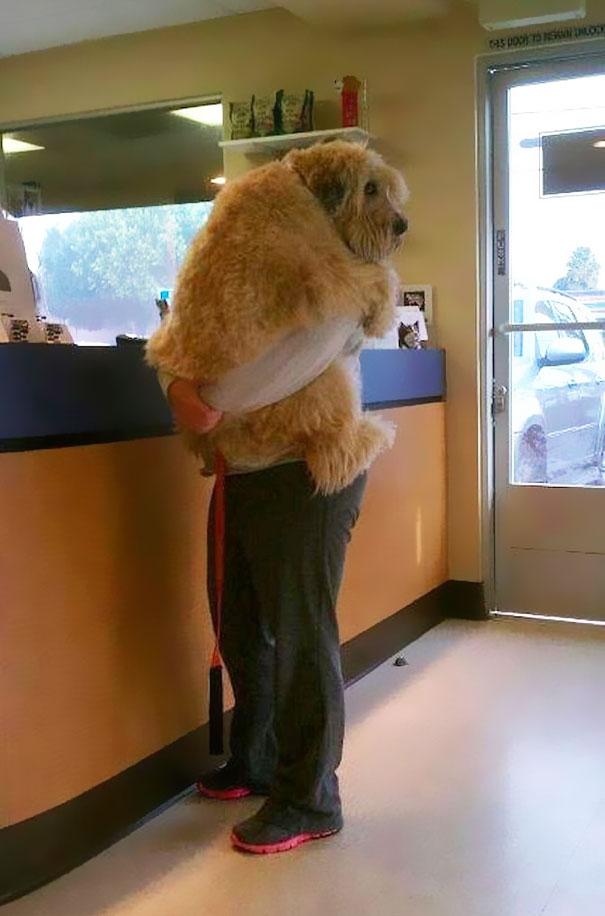 Cães fofos abraçando seus donos (6)