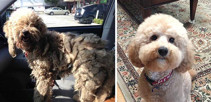 Cães resgatados antes e depois (1)