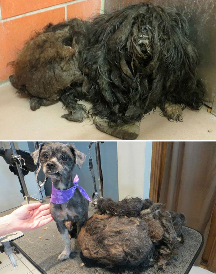 Cães resgatados antes e depois (11)