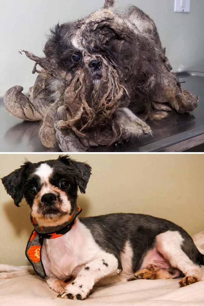 Cães resgatados antes e depois (13)