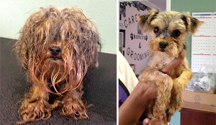 Cães resgatados antes e depois (2)