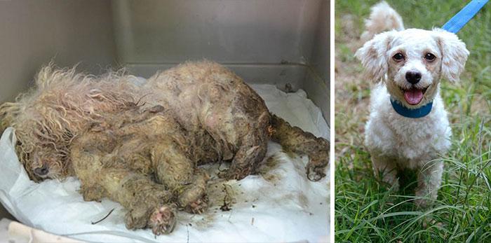Cães resgatados antes e depois (4)