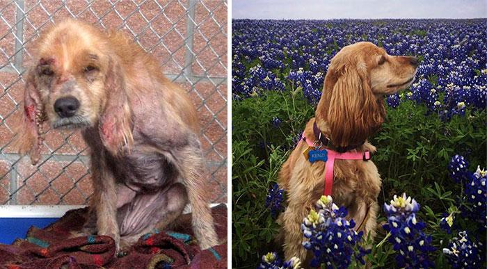 Cães resgatados antes e depois (5)
