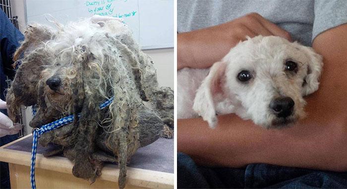Cães resgatados antes e depois (9)
