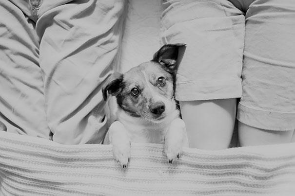 Casal faz um incrível book de recém nascido...com seu cão (11)