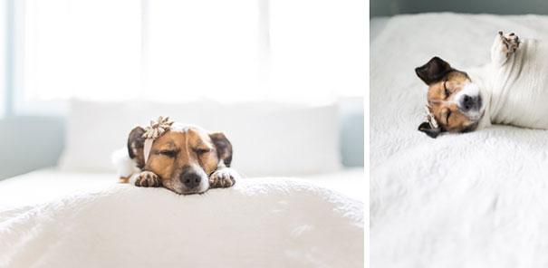 Casal faz um incrível book de recém nascido...com seu cão (14)