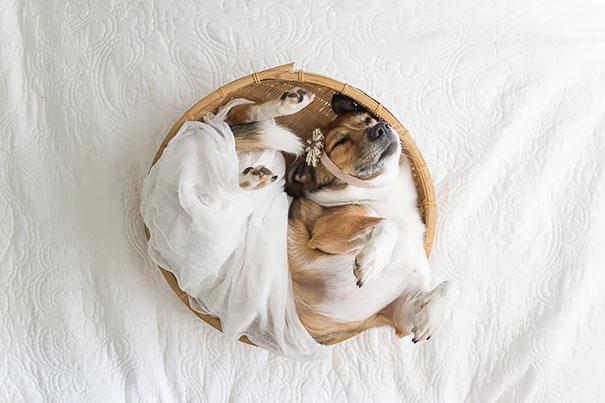 Casal faz um incrível book de recém nascido...com seu cão (6)