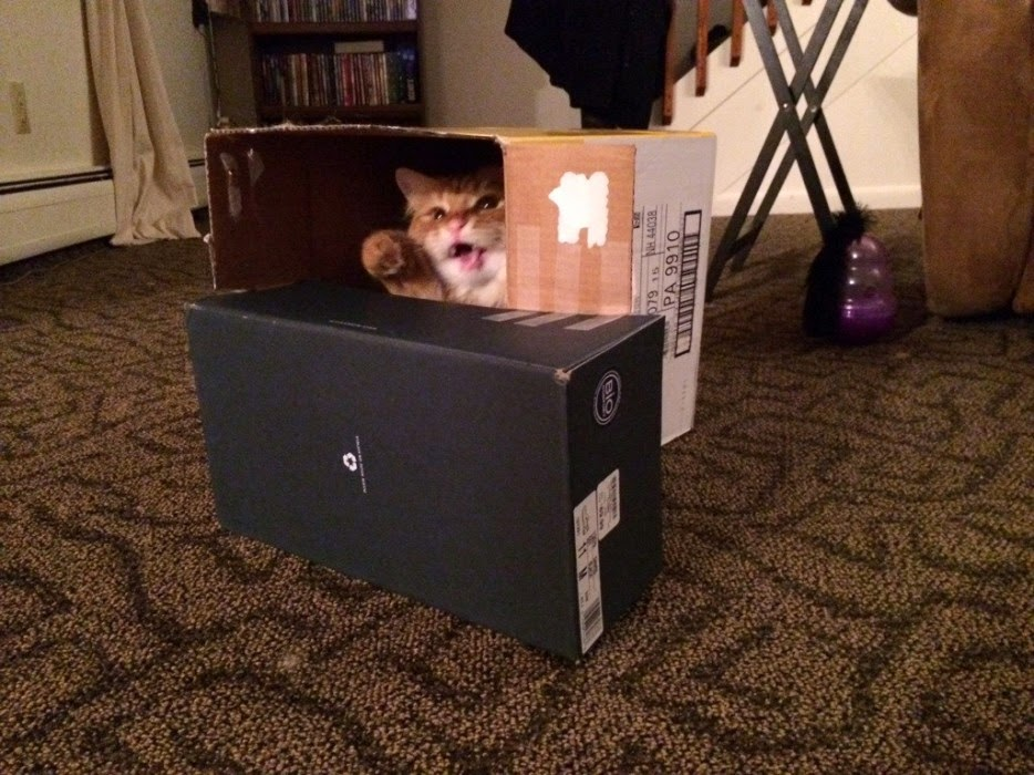 Esconderijos-mais-criativos-para-gatos-Blog-Animal (1)