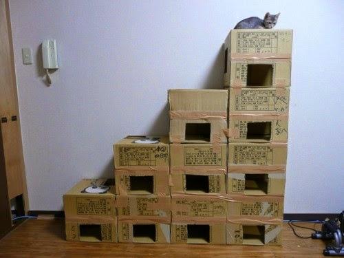 Esconderijos-mais-criativos-para-gatos-Blog-Animal (11)