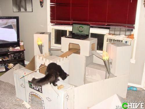 Esconderijos-mais-criativos-para-gatos-Blog-Animal (13)