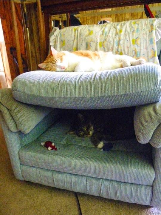 Esconderijos-mais-criativos-para-gatos-Blog-Animal (19)