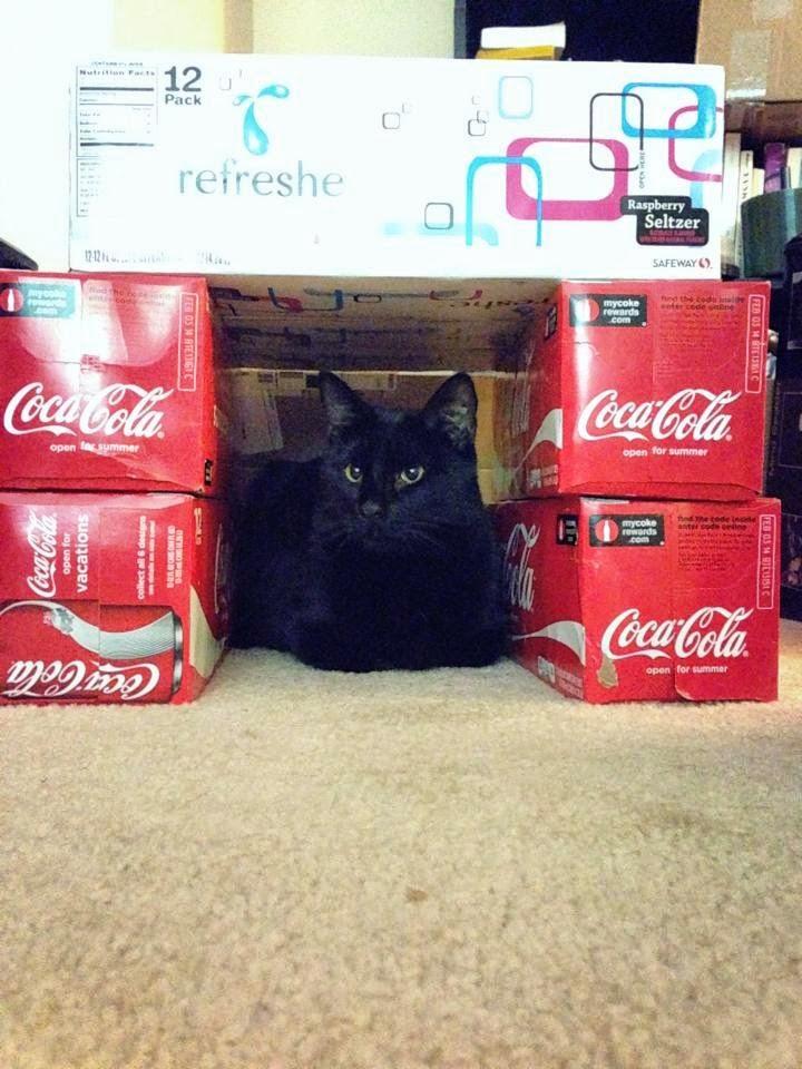 Esconderijos-mais-criativos-para-gatos-Blog-Animal (2)