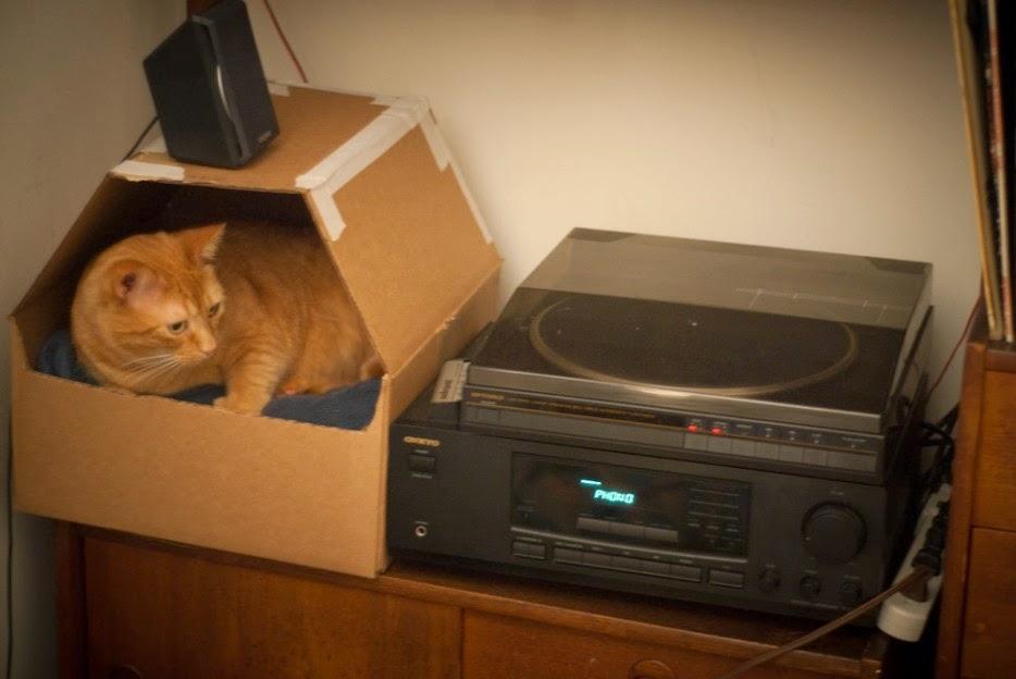 Esconderijos-mais-criativos-para-gatos-Blog-Animal (24)