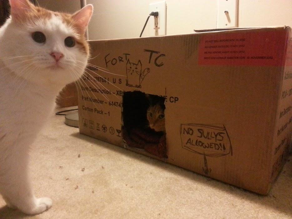 Esconderijos-mais-criativos-para-gatos-Blog-Animal (8)
