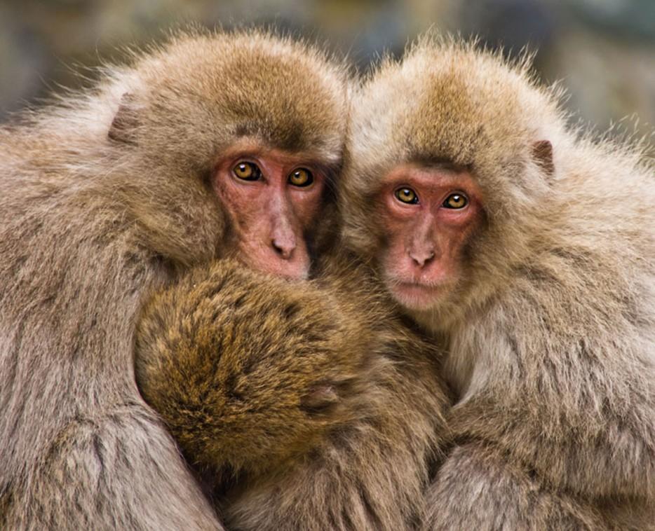 Fotos-da-vida-animal-em-momentos-extraordinários-Blog-Animal (10)
