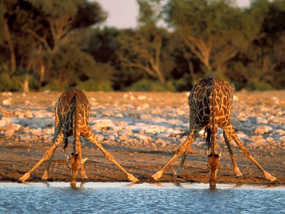 Fotos-da-vida-animal-em-momentos-extraordinários-Blog-Animal (13)