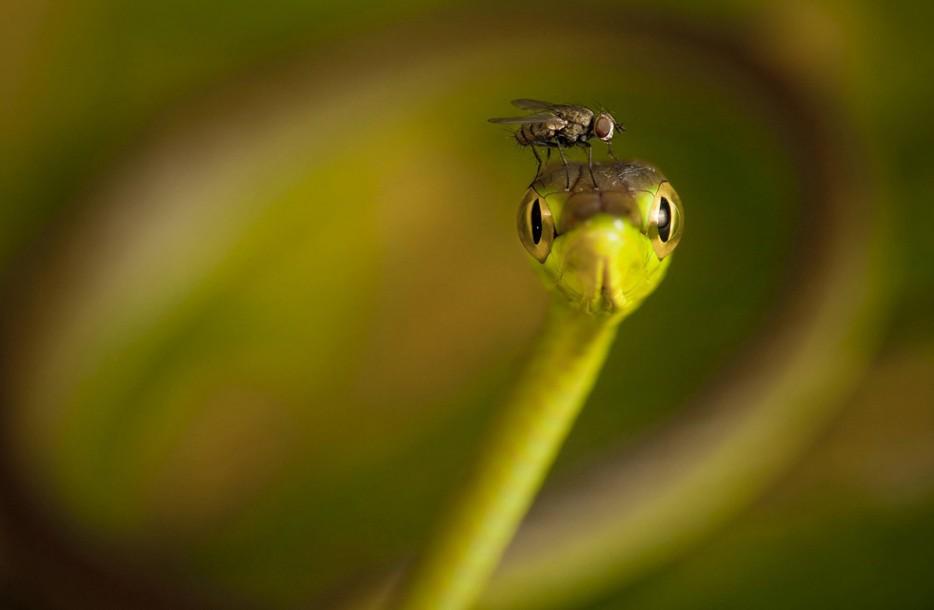 Fotos-da-vida-animal-em-momentos-extraordinários-Blog-Animal (14)
