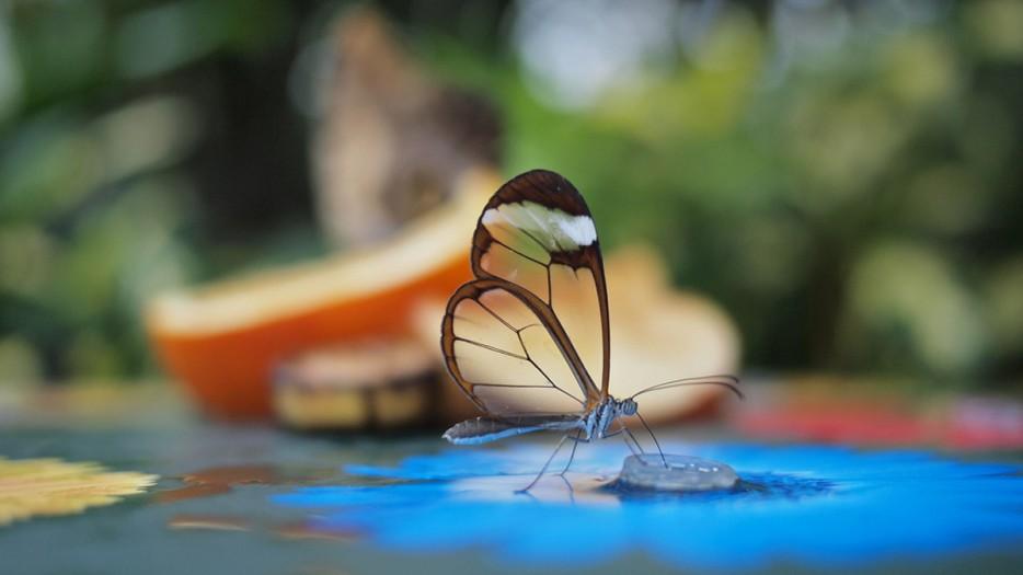 Fotos-da-vida-animal-em-momentos-extraordinários-Blog-Animal (15)