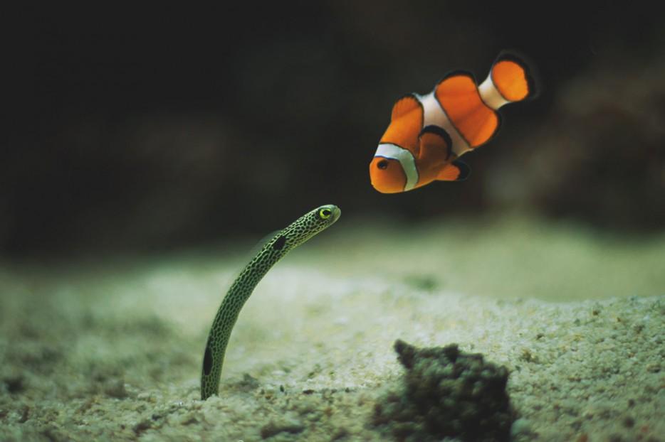 Fotos-da-vida-animal-em-momentos-extraordinários-Blog-Animal (18)