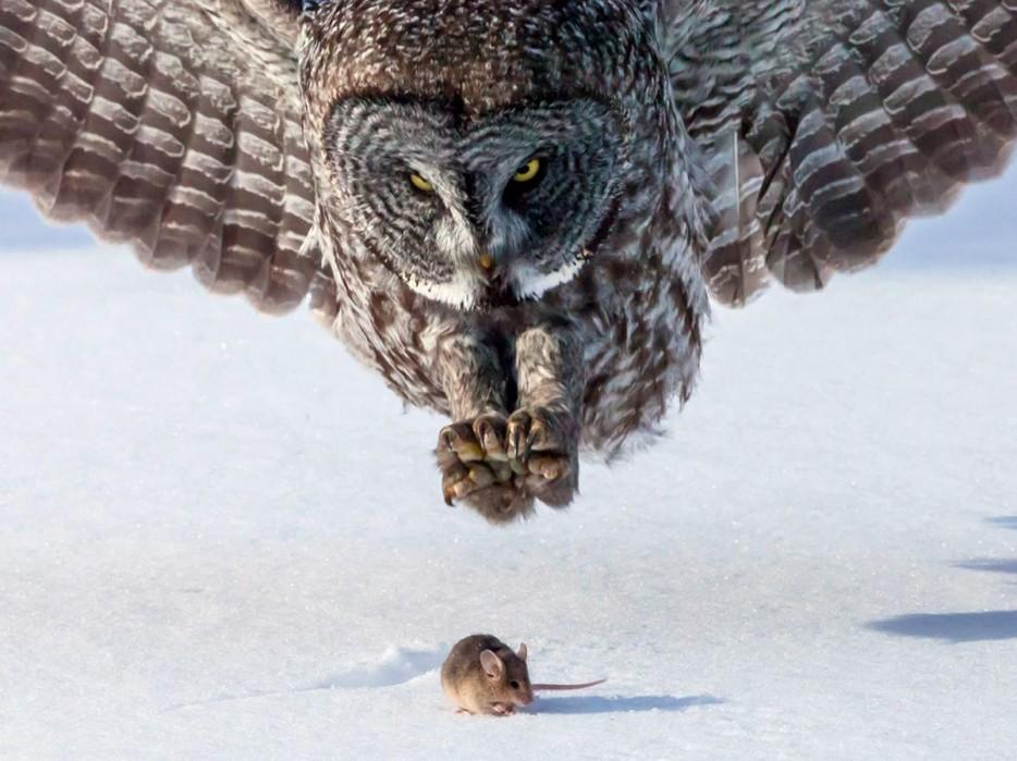Fotos-da-vida-animal-em-momentos-extraordinários-Blog-Animal (19)