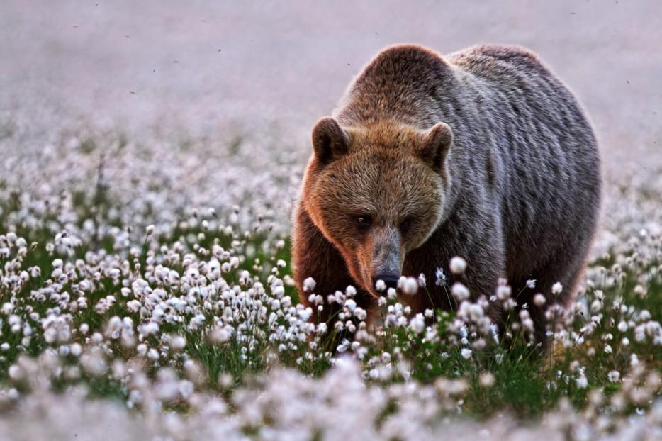 Fotos-da-vida-animal-em-momentos-extraordinários-Blog-Animal (2)