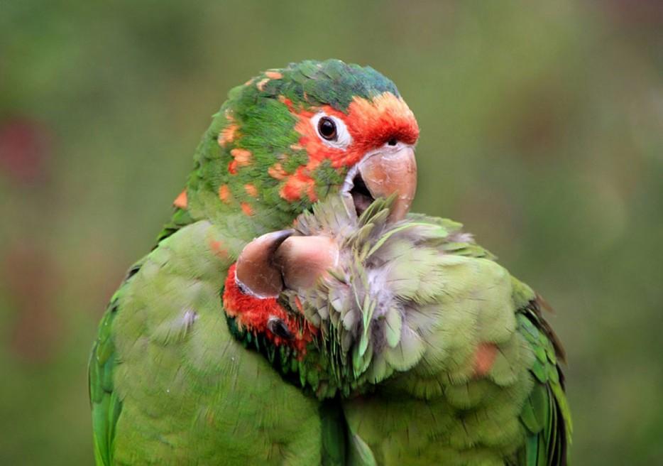 Fotos-da-vida-animal-em-momentos-extraordinários-Blog-Animal (21)