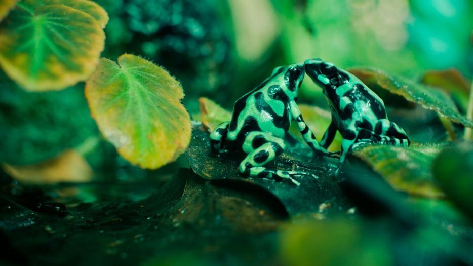 Fotos-da-vida-animal-em-momentos-extraordinários-Blog-Animal (26)