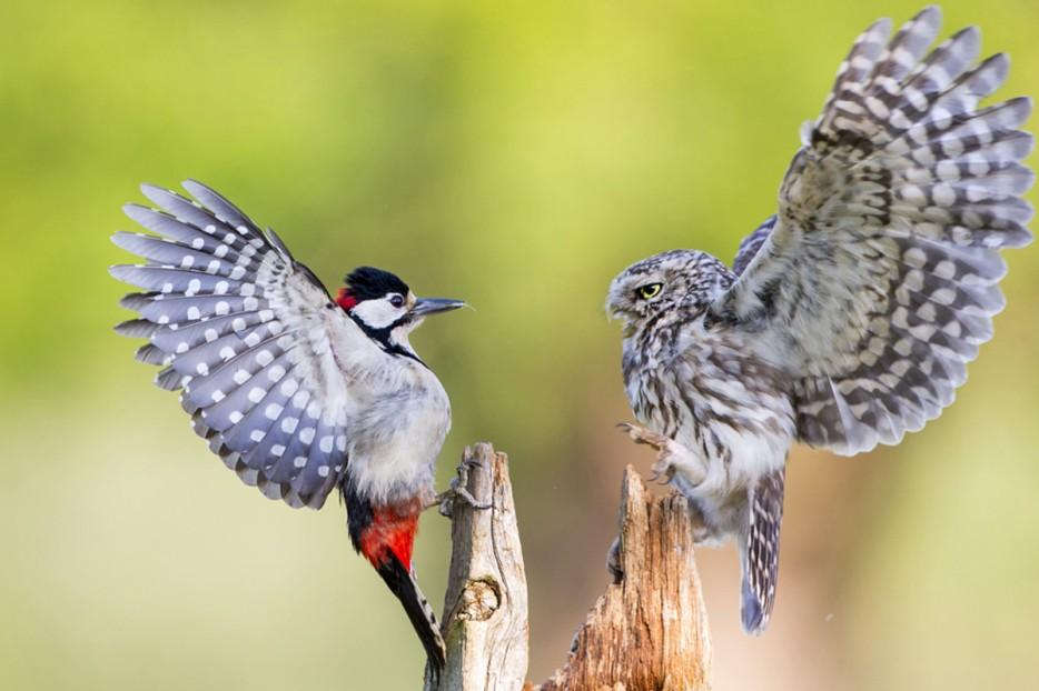 Fotos-da-vida-animal-em-momentos-extraordinários-Blog-Animal (27)