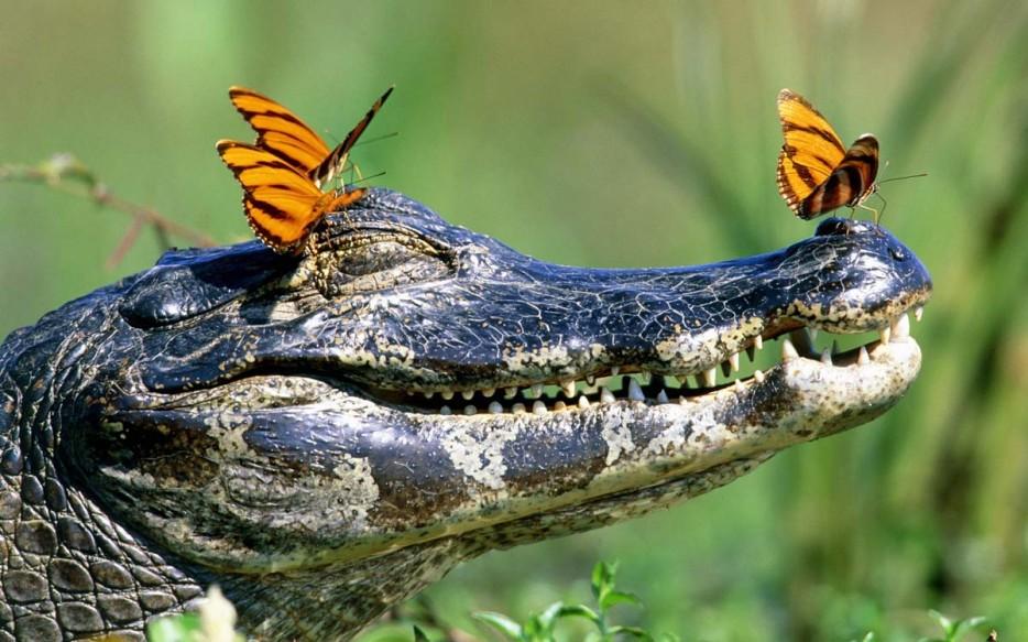 Fotos-da-vida-animal-em-momentos-extraordinários-Blog-Animal (28)