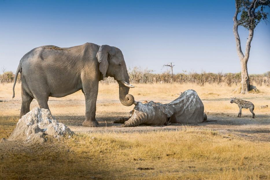 Fotos-da-vida-animal-em-momentos-extraordinários-Blog-Animal (31)