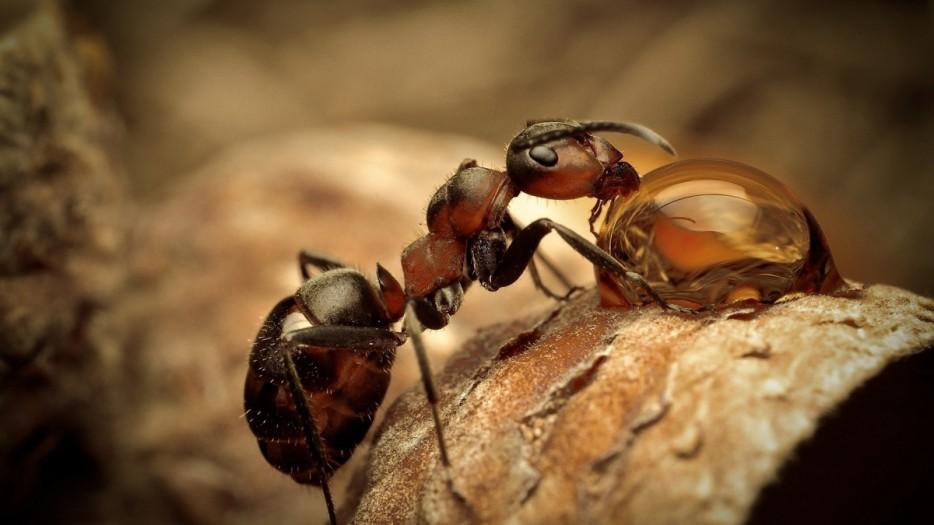 Fotos-da-vida-animal-em-momentos-extraordinários-Blog-Animal (32)