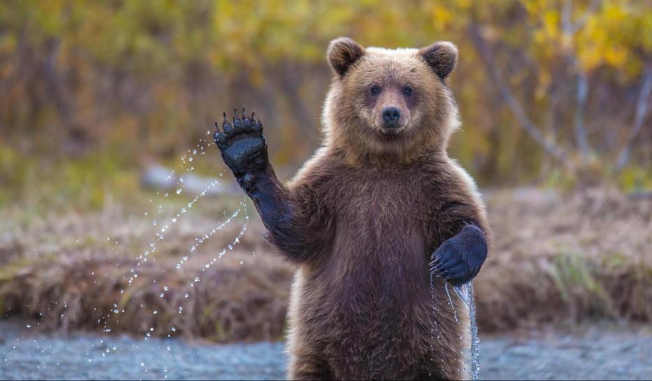 Fotos-da-vida-animal-em-momentos-extraordinários-Blog-Animal (33)