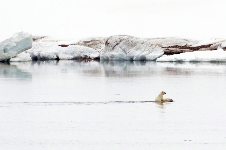 Fotos-da-vida-animal-em-momentos-extraordinários-Blog-Animal (34)